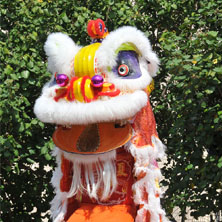 Dragon and Lion Dance Extravaganza